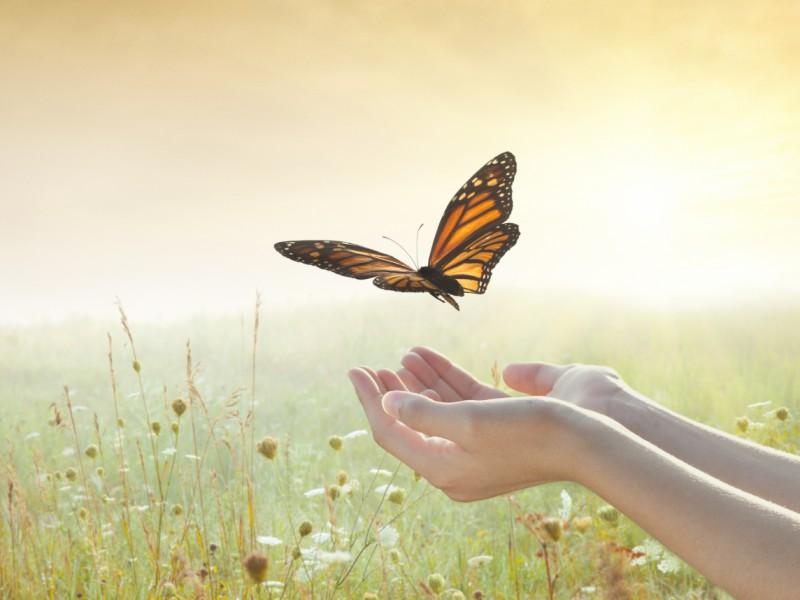8-weken Compassion en veerkracht